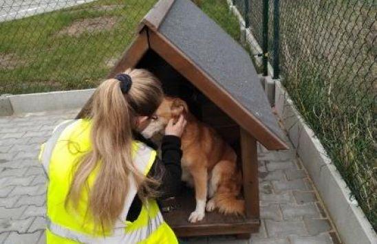Kolejny pies ze schroniska znalazł dom w ProNaturze